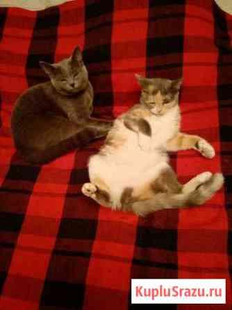 Кошечки Тобольск
