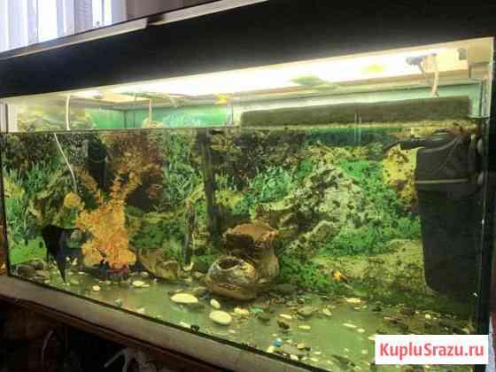 Продам аквариум 180 литров с подсветкой Дедовичи