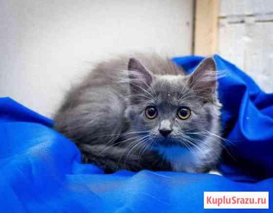Котята ищут дом Вологда