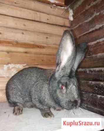 Продам кроликов Биробиджан