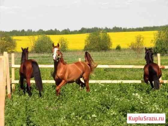 Постой лошадей Санкт-Петербург