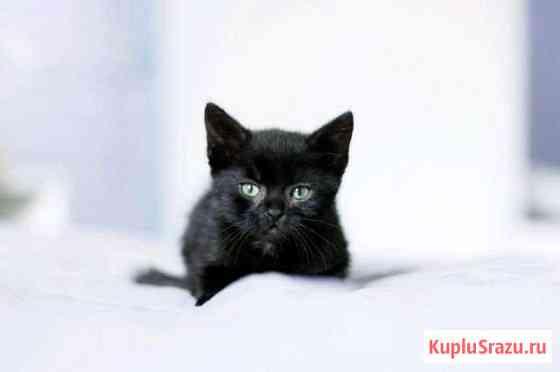 Кошки Засечное