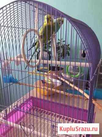 Попугай Хабаровск
