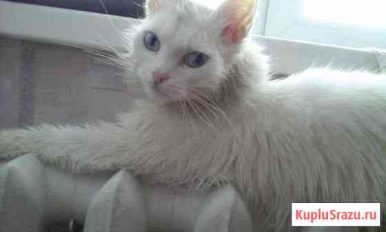 Отдам прекрасную кошку Алдан