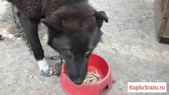 Экструдированный корм для животных Чита