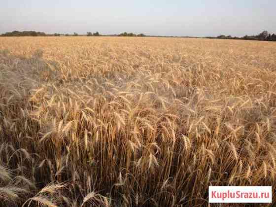 Быстроокупаемый сельхоз бизнес 1000га земли Хомутово