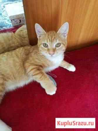 Очаровательный котик подросток 5 месяцев Биробиджан