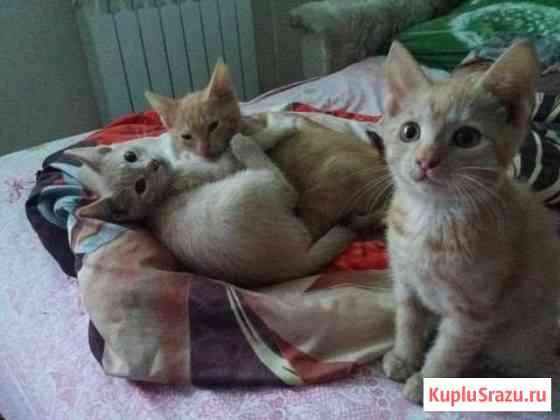 Котята Тюмень