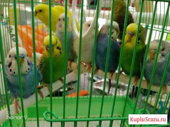 Попугаи Климово