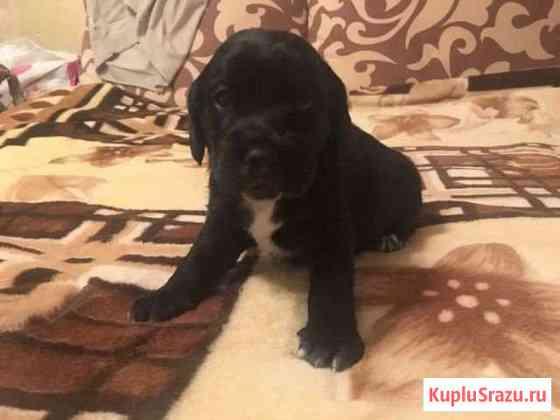 Собака Красково