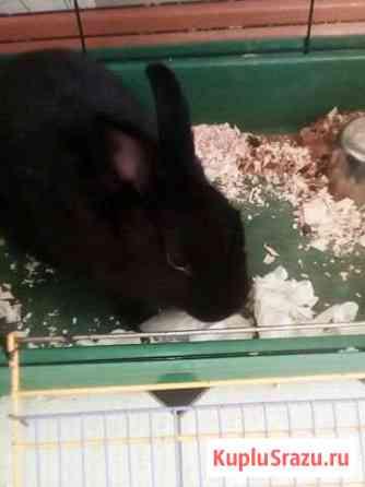 Кролик декоротивный Благовещенск