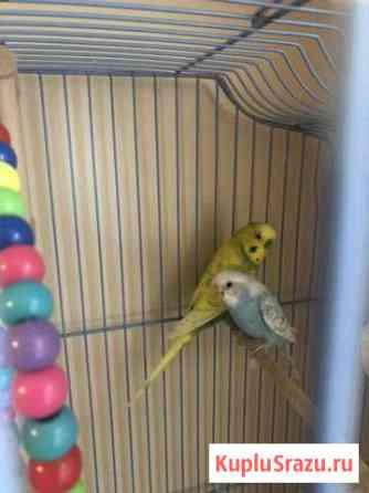 Волнистые попугаи с клеткой Петропавловск-Камчатский