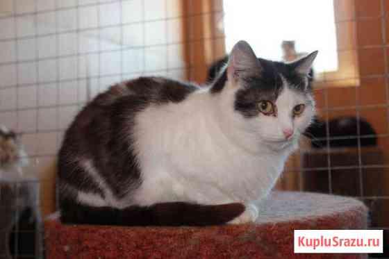 Бело-коричневые коты и кошки Барнаул