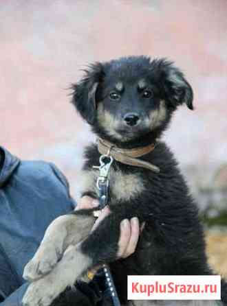 Отдам чудесного щенка-девочку, 2мес Чита