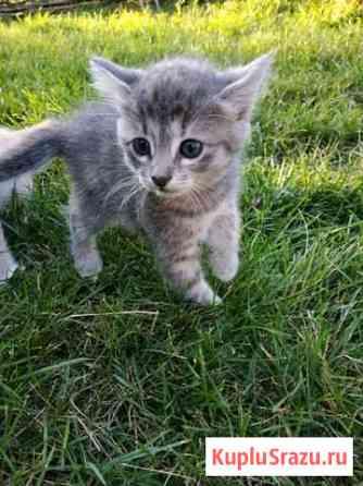 Котёнок Липецк