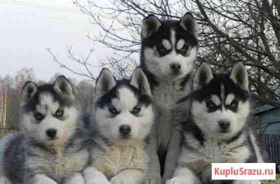 Самые красивые щенки разных пород Муром