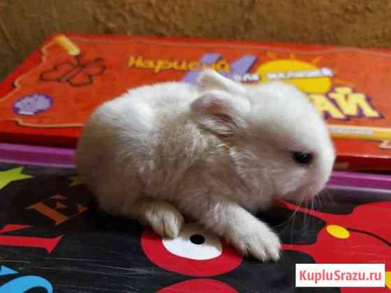 Кролики, крольчата декоративные, карликовые Краснодар
