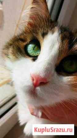 Кошка Пина Астрахань