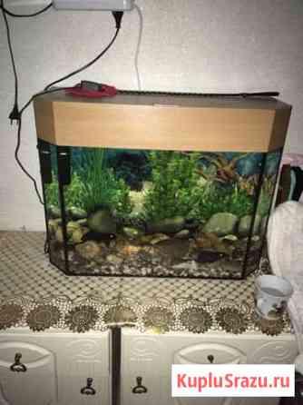 Аквариум с рыбками Озёры