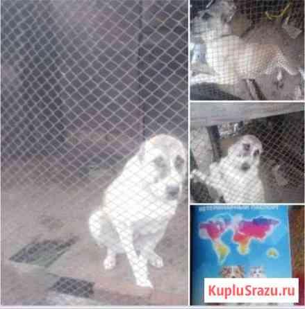 Продаю собаку Улан-Удэ