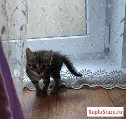 Пристрой котёнка Рубцовск