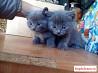 Милые котята ищут добрых хозяев