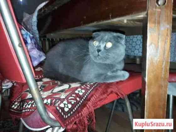 Кошка Домодедово