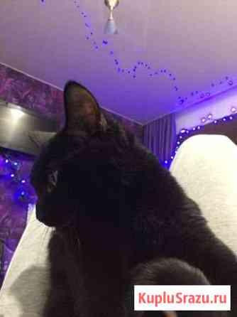 Отдам кошку в хорошие руки Мончегорск