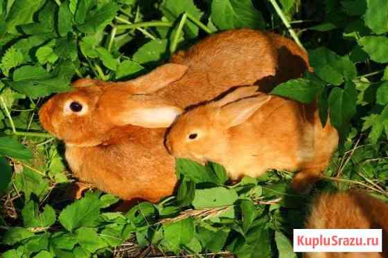 Кролики разных пород Пермь