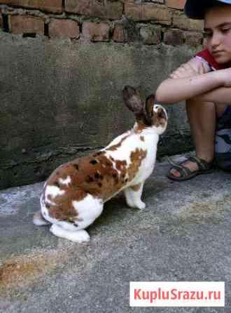 Кролики Апшеронск