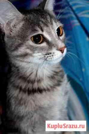 Отдам кошку-мышеловку Кемерово