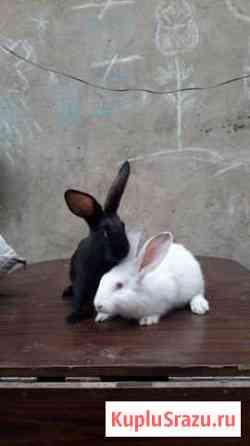 Кролики Иланский
