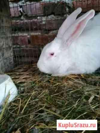 Кроличья ферма Пермь