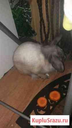 Кролик английской породы Краснодар