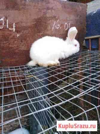 Кролики Данков