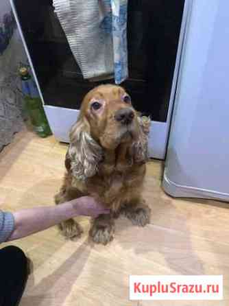 Красивая собака Северодвинск