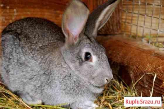 Кролики разных пород и возрастов Омск
