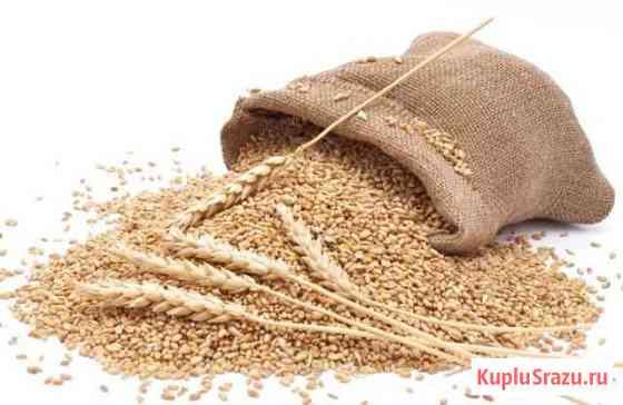Доставка пшеничных отрубей Ростов-на-Дону