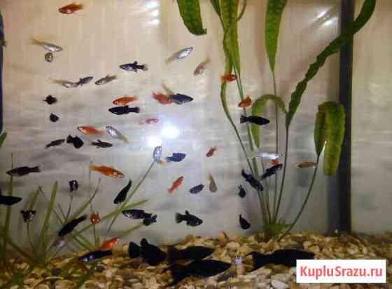 Мальки, аквариум на 6л,фильтр, отсадник Советск