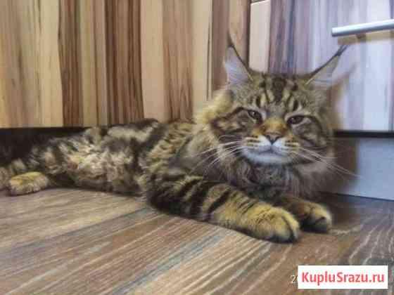 Ласковый зверь Кемерово