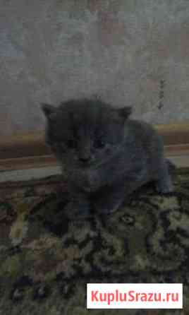 Подарю котёнка Шадринск