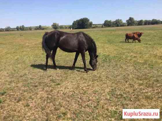 Лошадь с жеребенком Октябрьское