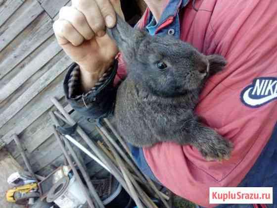 Кролики 1,5 и 2 месяца Барнаул