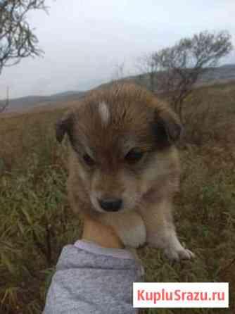 Бездомные щенята в дар Улан-Удэ
