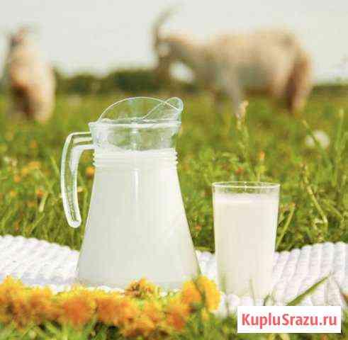 Молоко Козье Бирск