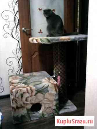 Домик для кота Краснодар