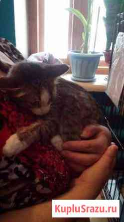 Крисуша лучший в мире кот ищет теплый дом Северск
