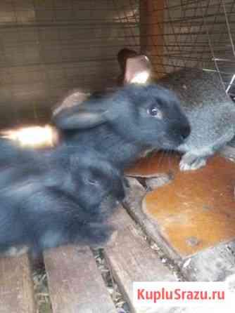 Кролики Новосибирск