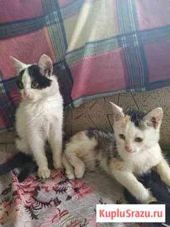 Котята в добрые руки 1месяц Кемерово