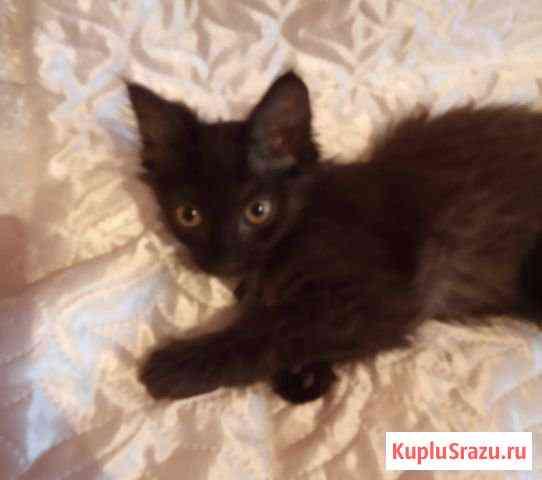 Котёнок Братск